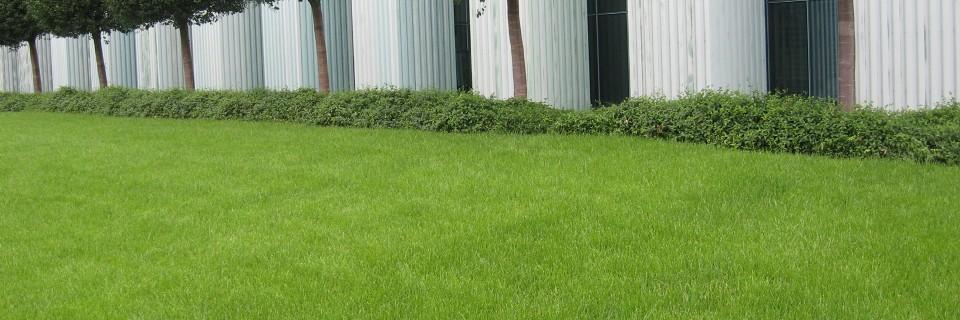 Ruloninė veja su pristatymu Vilniuje ir Kaune Nuo €3,30 /m² + PVM (nuo 1000 m²)
