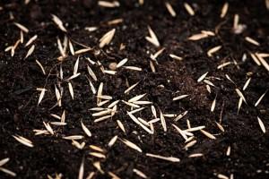 grass-seed-lg